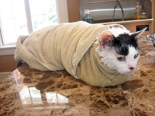 Что делать после купания кота