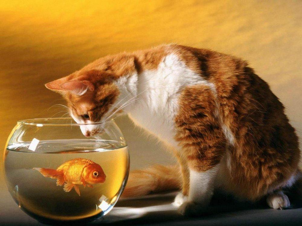 Воспитание кошки - возможно ли это?