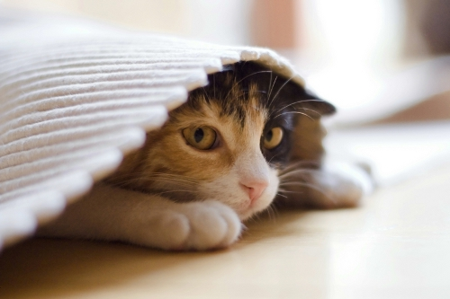 Как проявляется стресс у кошек