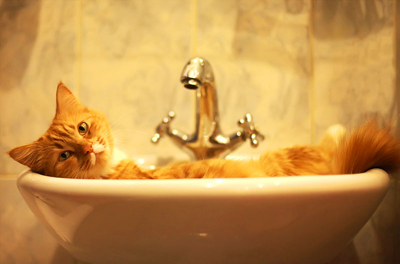 Подготовка к купанию кошки