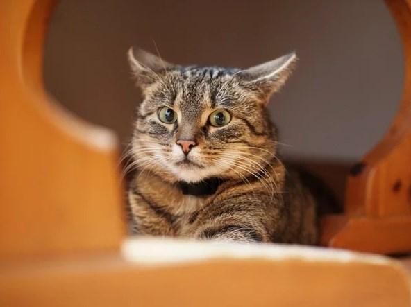 Стресс у кошек