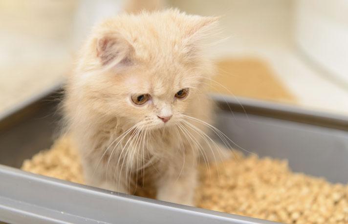 Воспитание кошки - с чего начать?