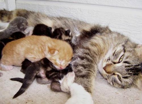 Развитие котенка в первые 4 недели