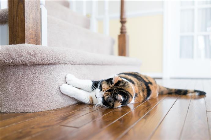 Кошачье общение